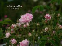 Mme A. Labbey