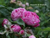 Honorine de Brabant