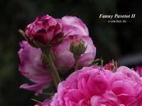 Fanny Pavetot II