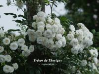 Trésor de Thorigny