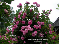 Mme Lauriol de Barny